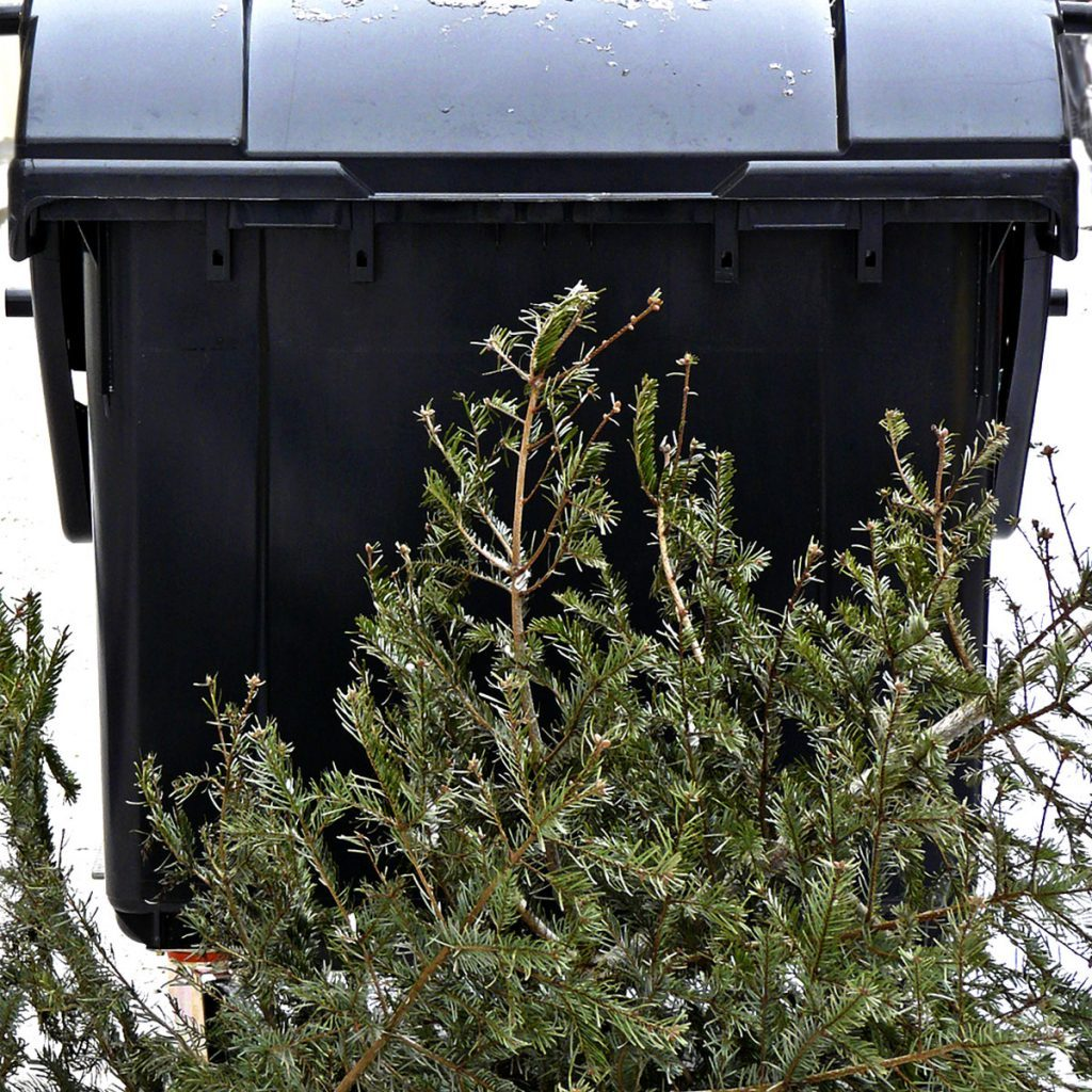 Why Is There A Christmas Tree: Christmas Tree Recycling: Why You Shouldn't Just Throw It