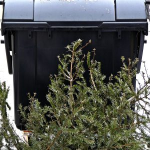 Christmas Tree Recycling: Why You Shouldn't Just Throw it Out