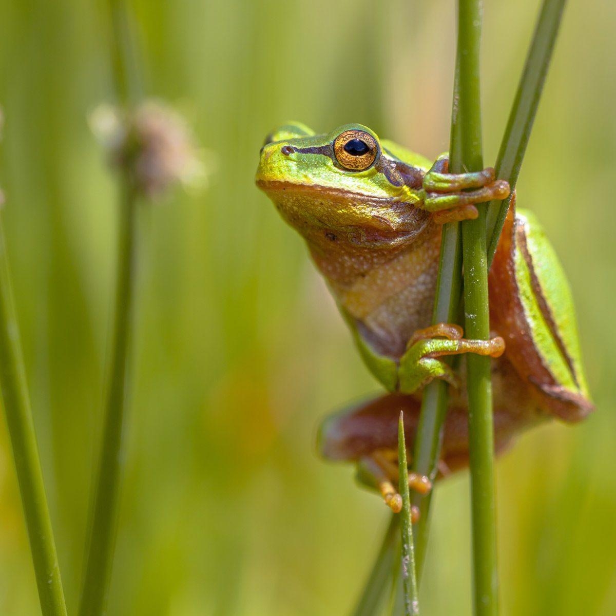 frog garden trends
