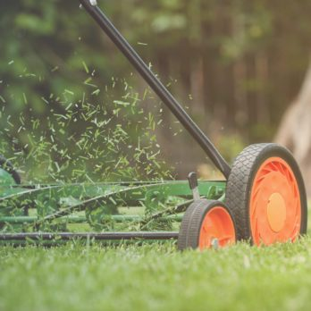 19 Things Your Landscaper Won't Tell You