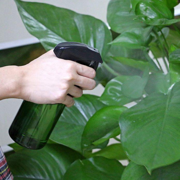 Plant Mister