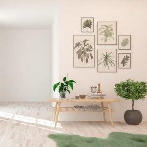 Top Tips for Arranging Indoor Plants