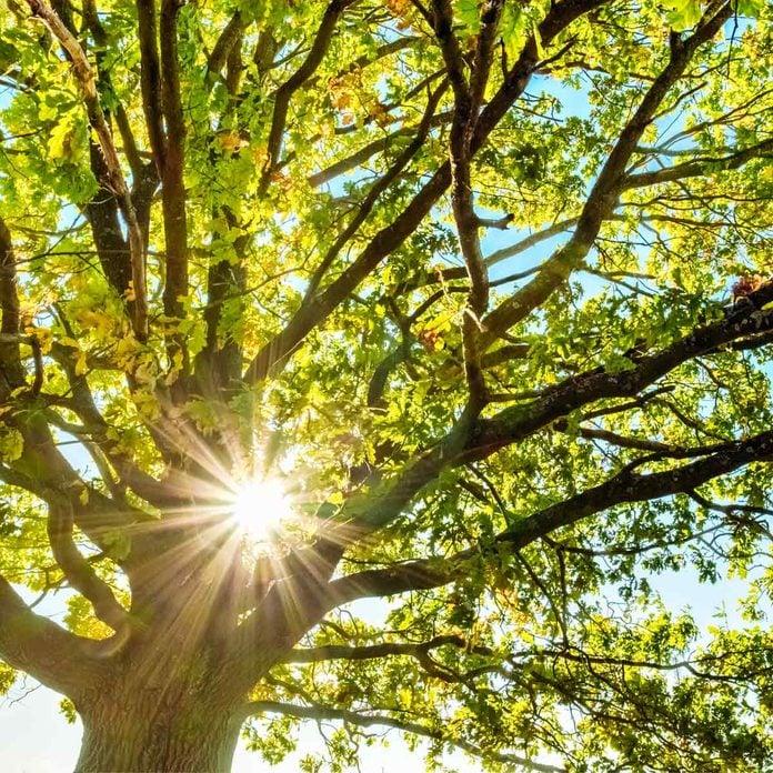 sunlight through tree sunny day