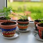 7 Steps to Reviving Almost Any Dead Plant