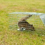 The Most Annoying Spring Pests and How to Manage Them