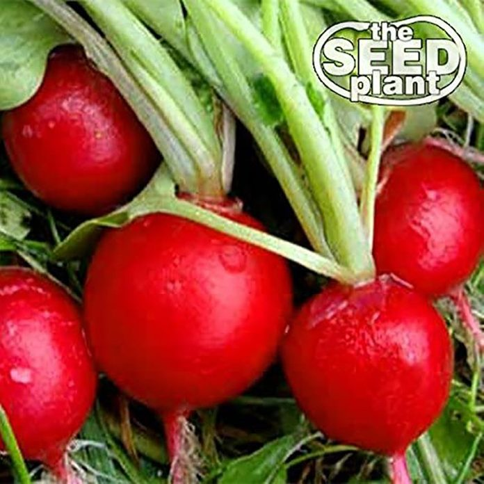 radishes grow at home