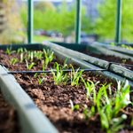 17 Easiest Foods to Grow at Home