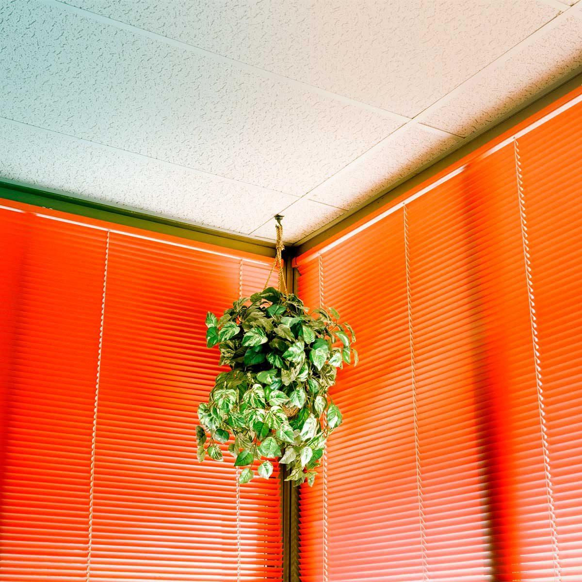 Indoor hanging plant