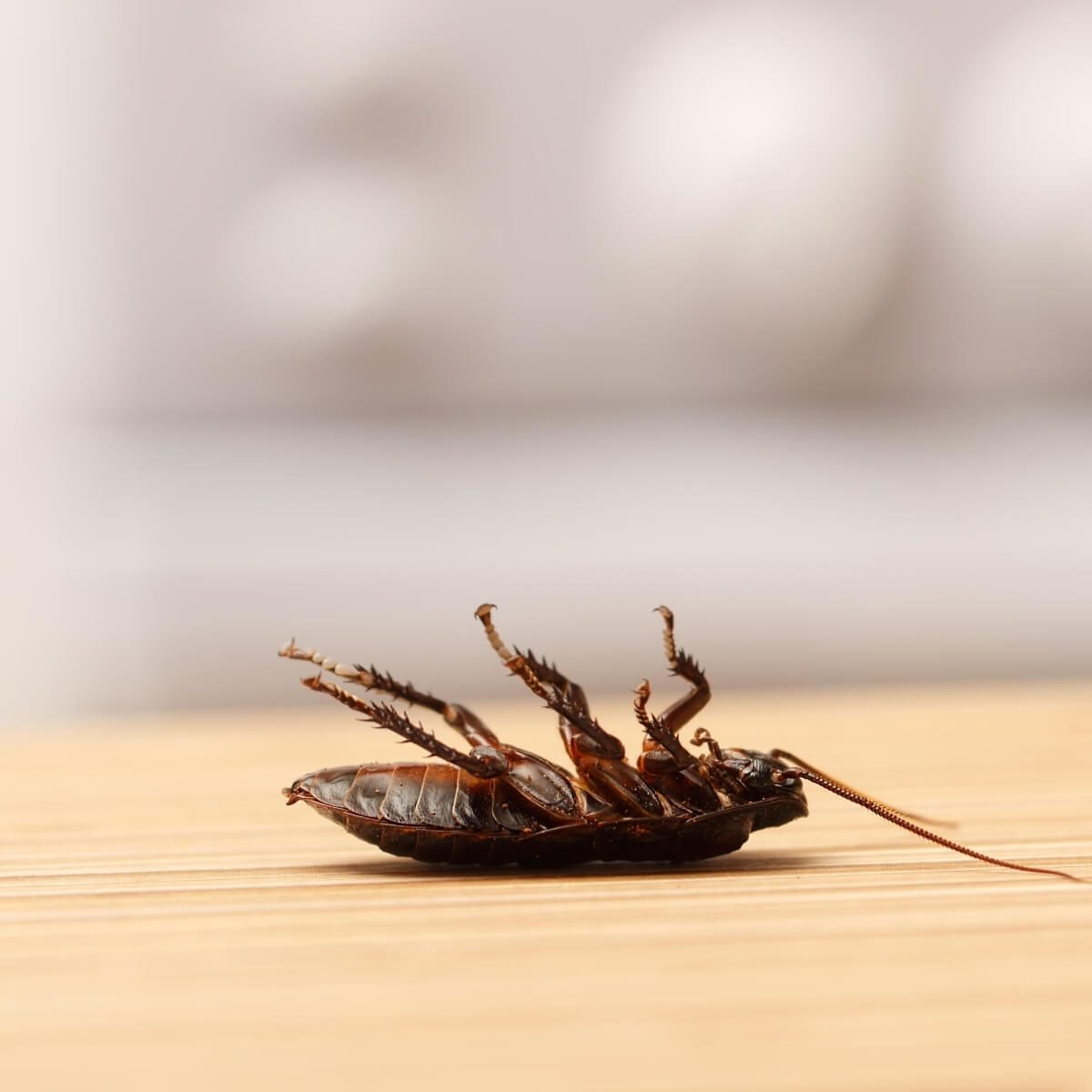 cockroaches dying on their back
