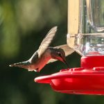 When Is the Best Time To Put Out Your Hummingbird Feeder