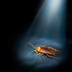 12 Interesting Cockroach Facts for Homeowners