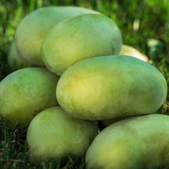 Pawpaw fruit