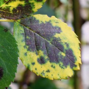 10 Common Plant Diseases (and How to Treat Them)