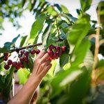 10 Ideas for Growing an Edible Landscape