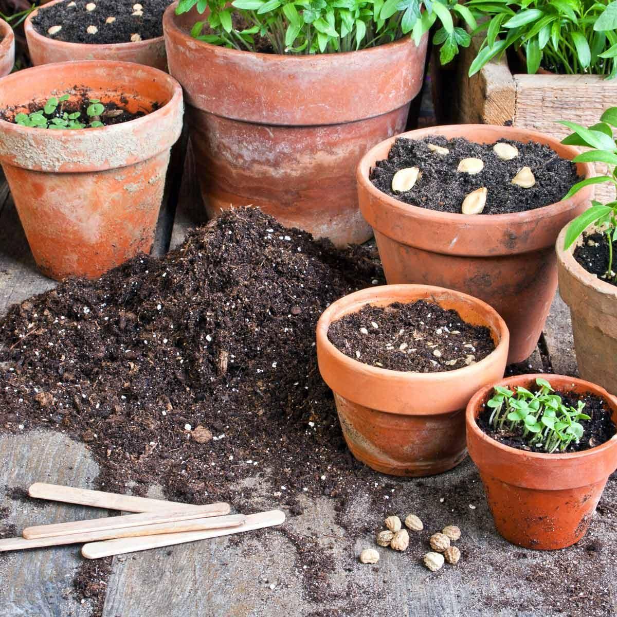 flower pots container gardening