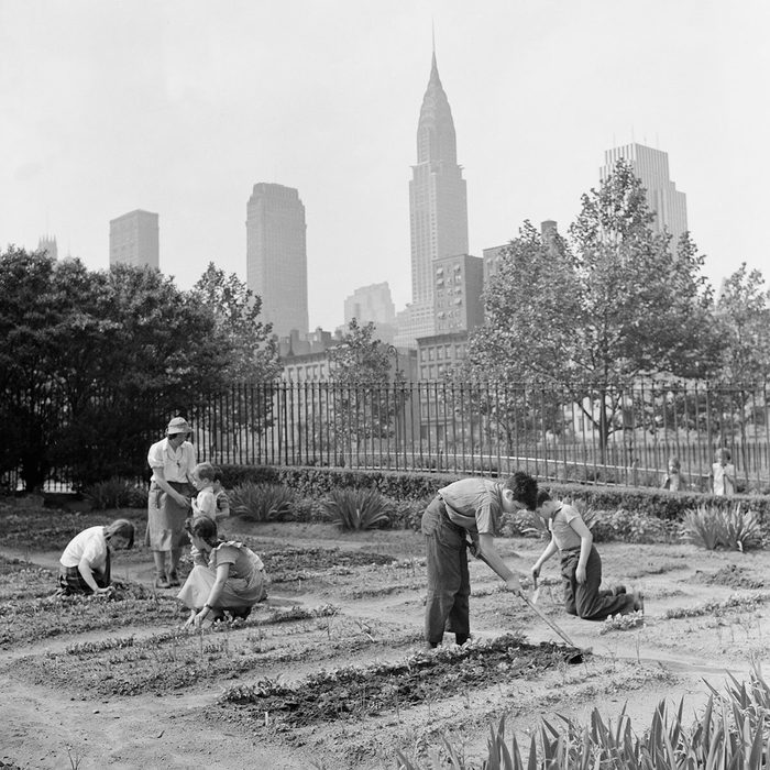 Children Working in School Victory Garden, First Avenue between Thirty-Fifth and Thirty-Sixth Streets, New York City, New York, USA, Edward Meyer for Office of War Information, June 1944. (Photo by: Universal History Archive/Universal Images Group via Getty Images)