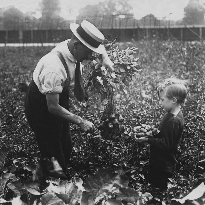 "(Original Caption) ""Dig For Victory"" - Allotments At Dulwich. (Photo by © Hulton-Deutsch Collection/CORBIS/Corbis via Getty Images)"
