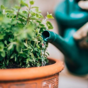 7 Ways to Conserve Water in the Garden