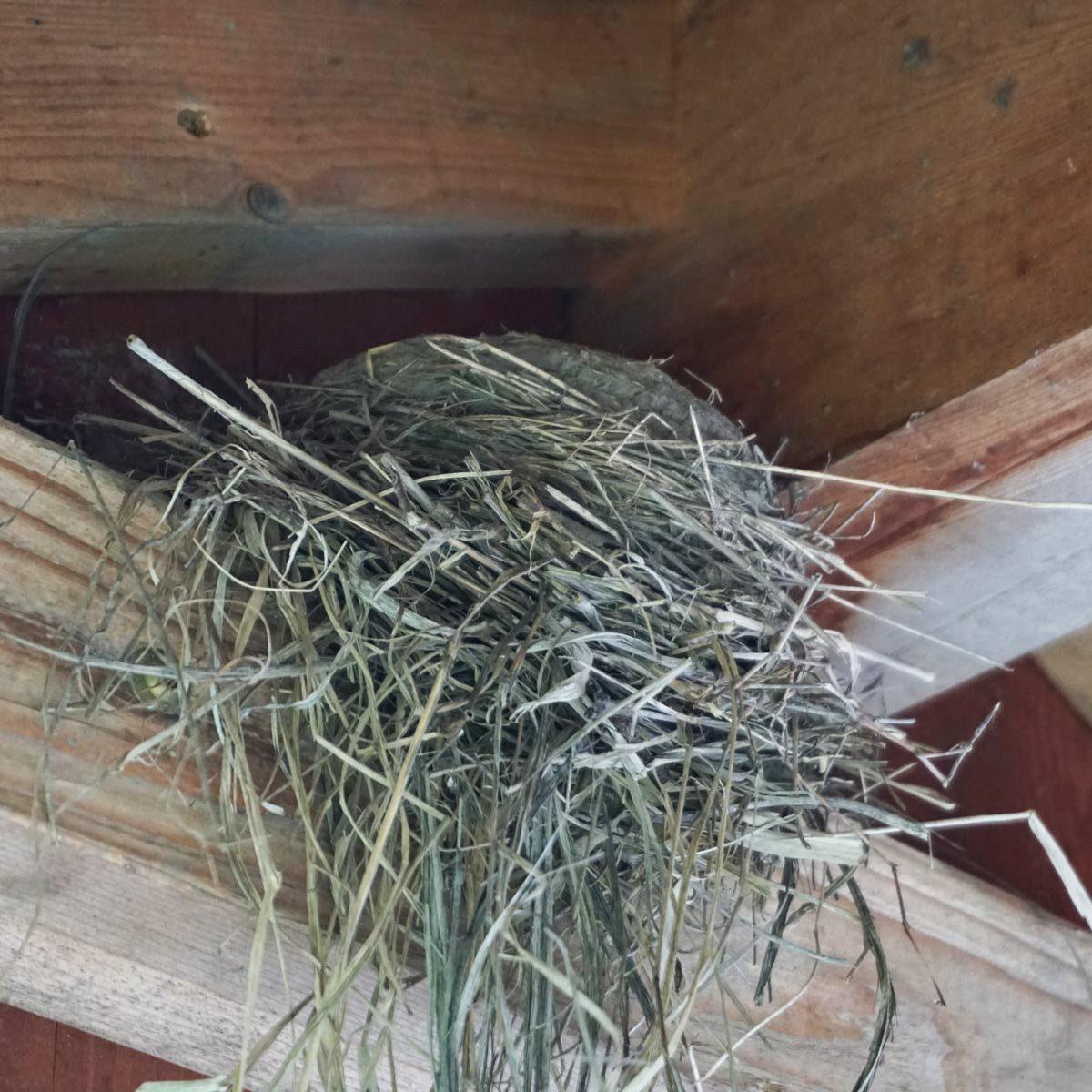 Birds nest in deck rafter