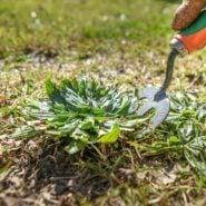 Make Your Own Weed Killer With Vinegar and Dish Soap