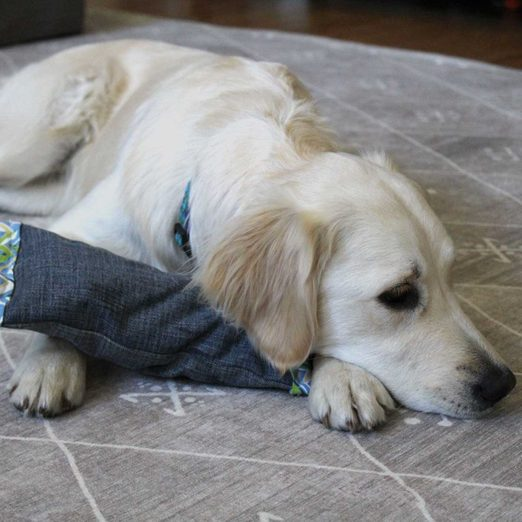 Dog laying with toy