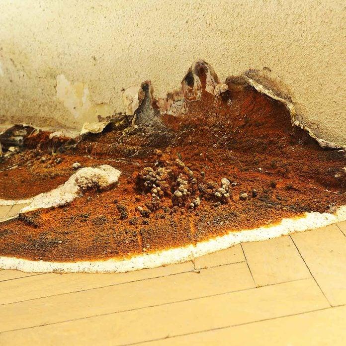 Serpula mold