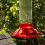 If Your Hummingbird Feeder Looks Cloudy, This Is What It Means