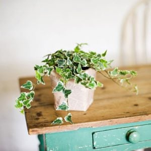 Why Plants are Perfect Housewarming Gifts (and 5 Great Ones to Give!)