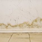 The Experts' Guide to Preventing Mold In Basements