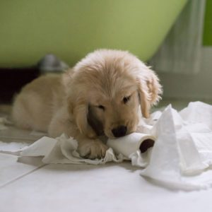 10 Ways to Puppy Proof Your Home
