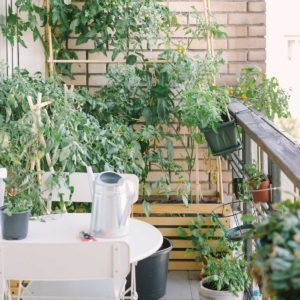 Urban Garden Products We Know You'll Love