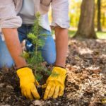 7 Things You Need to Know Before Planting a Tree