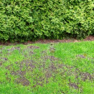 Will Grass Spread and Cover the Bare Spots in My Lawn?