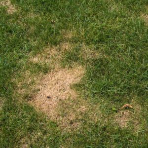 Why Are There Brown Spots On My Lawn?