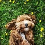 8 Pet-Safe Pest Control Products