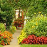 Gardening Basics to Keep Plants Healthy