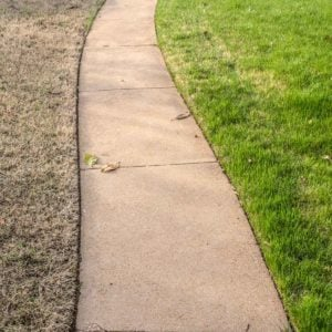 Top 10 Most Common Grass Problems