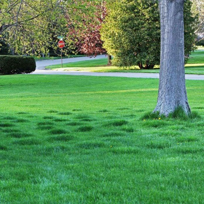 Lumpy lawn
