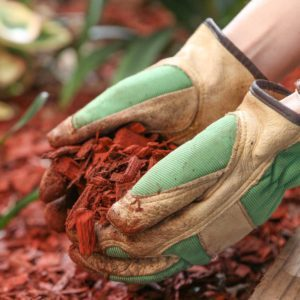 How Often Should You Remove and Replace Mulch?