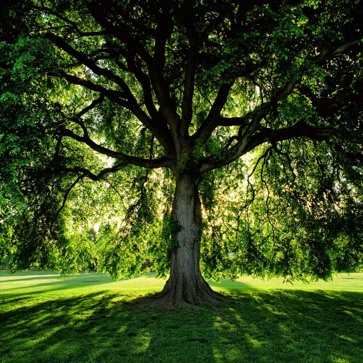 What Grass Grows In Shade and How Do I Grow It? | Family Handyman