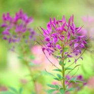 10 Fast-Growing Plants That Maximize Curb Appeal