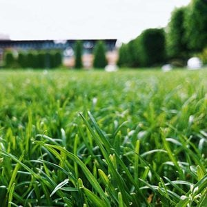 What To Know About Turf Grass