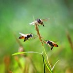 5 Ways to Treat a Bee Sting