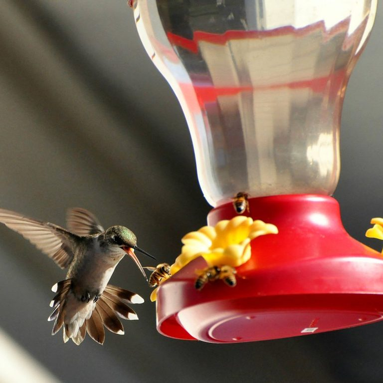 bees around hummingbird feeder
