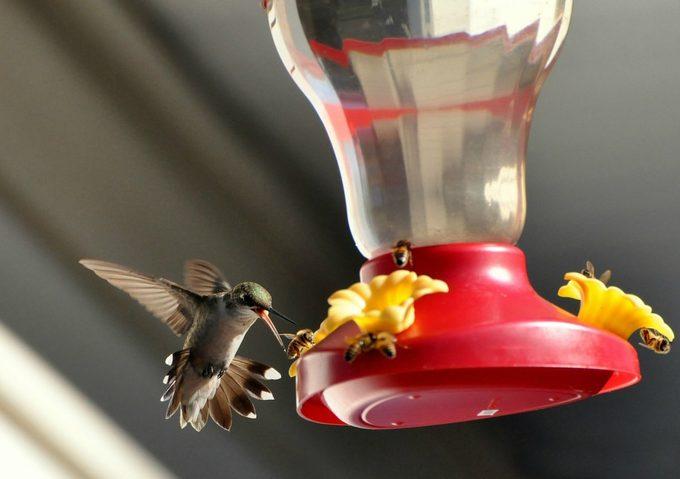 bees around hummingbird feeder