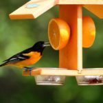10 Types of Bird Feeders You Need in Your Backyard
