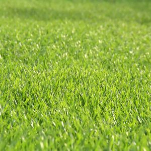 What Is Liquid Aeration for My Lawn?