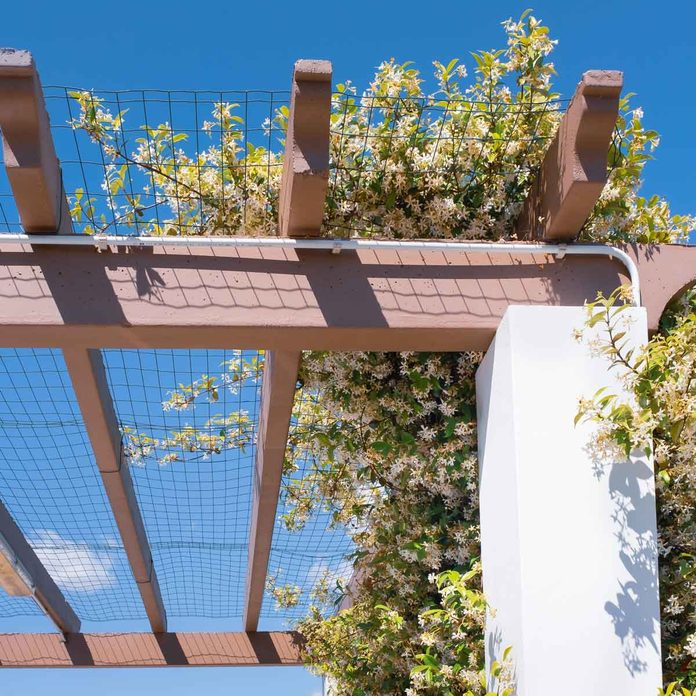 Pergola with wire and jasmine flowers
