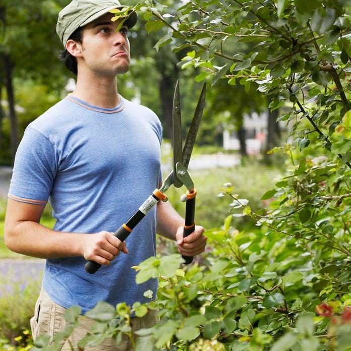 Prune bush