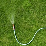 When Is the Best Time to Water My Grass?